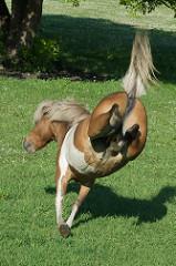 Horse Kicking